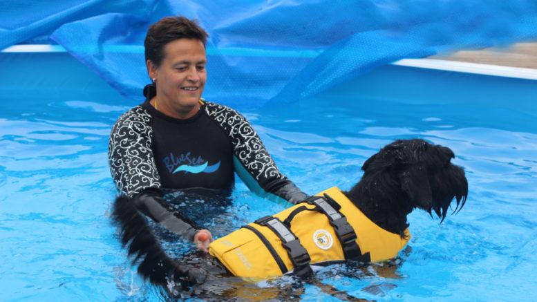 Sari Flinck ja hänen Kaapo-koiransa viihtyvät koirauimala Polskeen altaassa. Aluksi Kaapolla meni totutteluun aikaa, mutta keskikokoinen snautseri hyppää nyt jo altaaseen häntä heiluen.